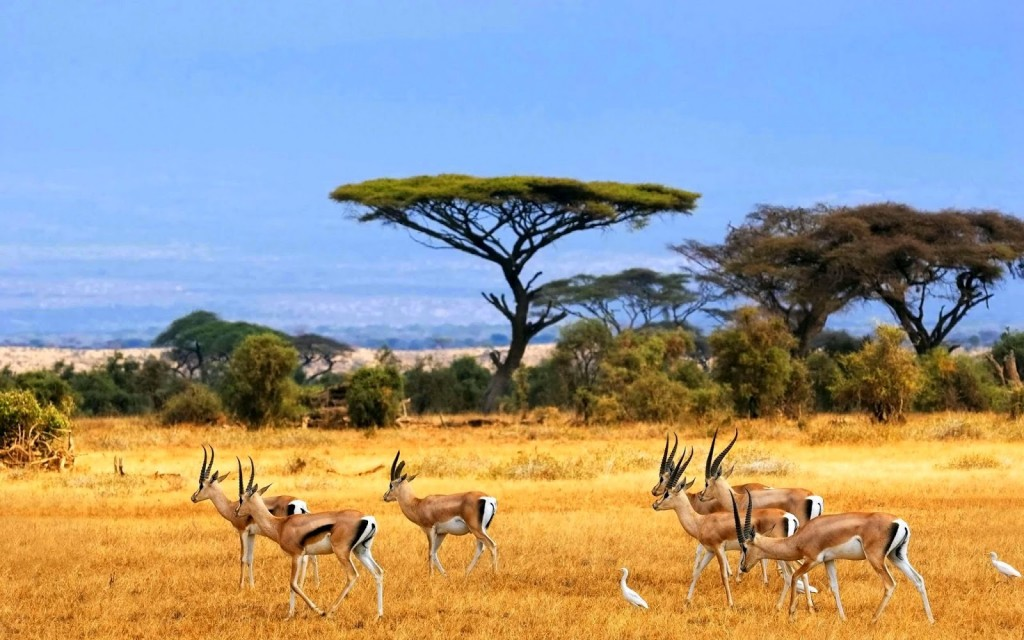 african-antelopes-animal-hd-wallpaper-high-quality-pc-dekstop-nature-landscapes-images-antelope-hd-wallpaper