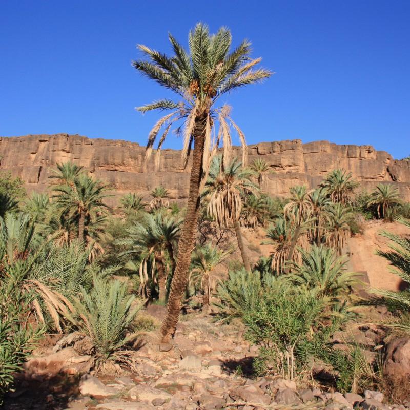 Maroko-widoczek