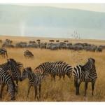 Kenia. Na safari w Masai Mara